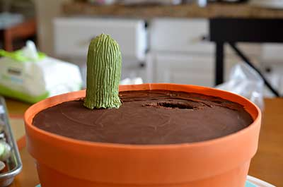 Cactus