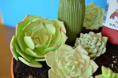 Edible Gumpaste Succulents